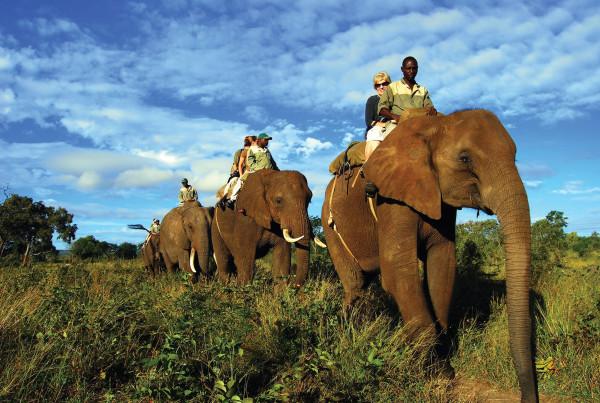 SAFPAR - Elephant